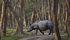 Afričtí pytláci chtěli ulovit nosorožce. Při útěku před policií ale narazili do kozy a zabili se