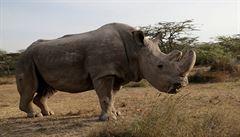 Počet upytlačených nosorožců v Jihoafrické republice značně klesl