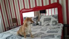 PSÍ BLOG: Noc se psem v bordelu a jiné hotelové příhody