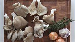 Hlíva ústřičná či šiitake. Pěstujme houby jedlé i léčivé