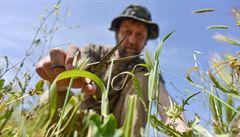 Složení rostlin dodnes ukazuje na biblická sídla, ukázali vědci