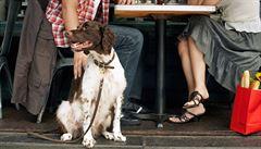 TRČKA: Pes v restauraci? V pejskařské velmoci, jakou je Česko, běžný obraz
