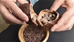 Majitelé čokoládoven se učili na plantáži i metodou pokus omyl