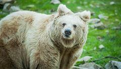 Vidět medvěda na zahradě bylo velmi nepříjemné, říká chovatel, který přišel o ovce a včely