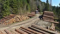 Lesům ČR klesl zisk o téměř půl miliardy