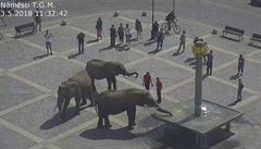 Přerov uložil cirkusu za promenádu slonů v centru města pokutu 6000 korun