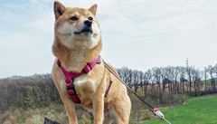 PSÍ BLOG: Se psem na rozhlednu a zřícený hrad v Malých Karpatech