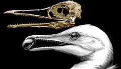 V USA našli fosilie pravěkých ptáků ichthyornisů. Žili před 85 miliony let