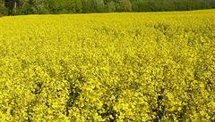 Vodu pod Českem znečistila hnojiva. Jde o důsledek velkých lánů řepky a kukuřice
