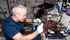 Vesmírné zahradničení. Jak si budou kosmonauti pěstovat zeleninu?