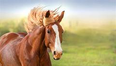 Zeptali jsme se vědců: Jaký účel má bílá skvrna mezi očima koně či osmáka degu?