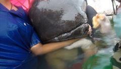 Velrybu v Thajsku zabily plastové pytle. V žaludku jich měla 80