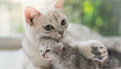 Kvůli masu zabil tisíce koček. Keňan půjde do vězení na tři roky