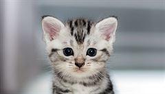 V Turecku otevřeli bazén pro kočky, koťata učí plavat