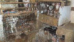 Chovatelé 218 psů dostali za týrání podmínku. Vymklo se nám to, přiznali