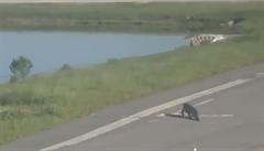 VIDEO: Provoz na letišti v Orlandu zdržel aligátor. Procházel se po přistávací ploše