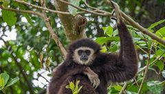 V čínské hrobce našli vědci vyhynulý druh opice