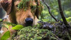 Když pes vezme do tlamy ropuchy, vypláchněte mu ji, říká veterinářka