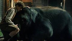 'Slon není herec!' Ochránci zvířat chtějí bojkotovat film o bombardované zoo