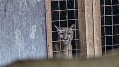 Zoopark ve Zvoli, ze kterého dvakrát utekla puma, končí. Nemá licenci na provoz