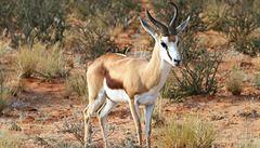 V Jižním Súdánu je ráj divoké fauny a flóry. Kvůli válkám jde o nejméně prozkoumanou přírodu na světě