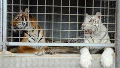 KAMBERSKÝ: Tygrovaní pokrytci. Nejsme náhodou nechtěnými spolupachateli?