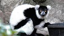 Andasibe-Mantadia, Madagaskar