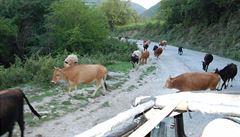 SMS Petry Procházkové z Kavkazu: Místní nerespektují žádná pravidla silničního provozu