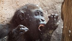 V pražské zoo zvířata ochlazuje studená sprcha i zmrzlina