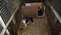 Výbor doporučil navýšit trest za týrání zvířat o rok na šest let. Původní přísnější trest neprošel