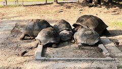 Pokrmy z želvího masa dříve Senegalci milovali, teď jsou velkými ochránci těchto zvířat