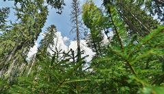 Žofínský prales a Hojná voda. Nejstarší národní rezervace slaví 180 let