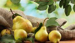 Proč klesá produkce hrušek? Tradiční české ovoce mizí