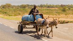 Zabíjí je kvůli masu a kůži. Keňské osly ohrožuje nenasytná čínská poptávka
