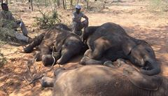 V Indii zabilo elektrické vedení sedm slonů. Místní aktivisté obviňují železniční společnost