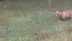 Medvěd na Zlínsku se chová nezvykle, zvykl si na lidi. Čunek ho chce nechat odstřelit