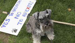 V Londýně demonstrovali psi a jejich páníčci proti brexitu