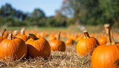 Podzim se blíží. Přinášíme pět jednoduchých receptů z dýně