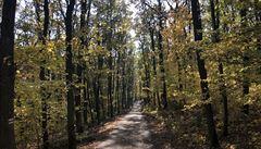 Odumírající lesy kvůli kůrovci můžou zhoršit kvalitu vody, obávají se odborníci