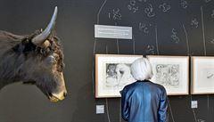 RECENZE: Vášeň a vina. Pablo Picasso stokrát v Praze