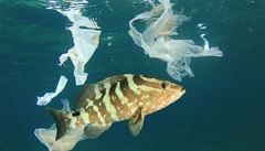 Až 99 procent odpadků v mořích není k nalezení. Vědci pátrají po 'neviditelných' plastech