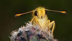 Hmyz jako biologická zbraň. Vedlejší produkt potřeby geneticky upravovat plodiny