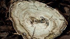 Zeptali jsme se vědců: Zkamenělé dřevo, které obsahuje železo. Jak se tam dostalo?