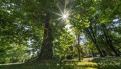 Švýcarští vědci přišli s novým řešením globálního oteplování. Navrhují vysadit bilion stromů