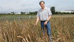 Povolte u plodin úpravu genů, vyzývají vědci. Regulace by způsobily zaostávání Evropy