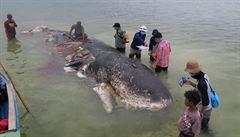 V Indonésii našli mrtvou velrybu, v sobě měla přes tisíc kusů plastu