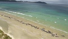 U Nového Zélandu uhynulo 145 kytovců. Záchranu zkomplikovala izolovanost místa i nedostatek lidí