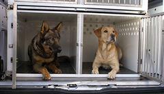 Policejní psi se vozí v opotřebených autech. Vedení pro ně nakoupí nová za 100 milionů