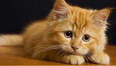 Kočka propašovala do brazilské věznice pilku, mobil či vrtáky