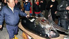 Obří tuňák se na aukci v Japonsku prodal za rekordní částku 69 milionů korun
